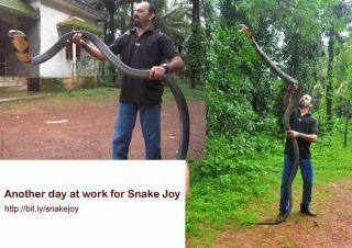 big snake..